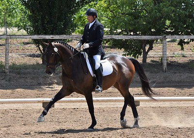 Dressage in the Almonds 5/7/2017