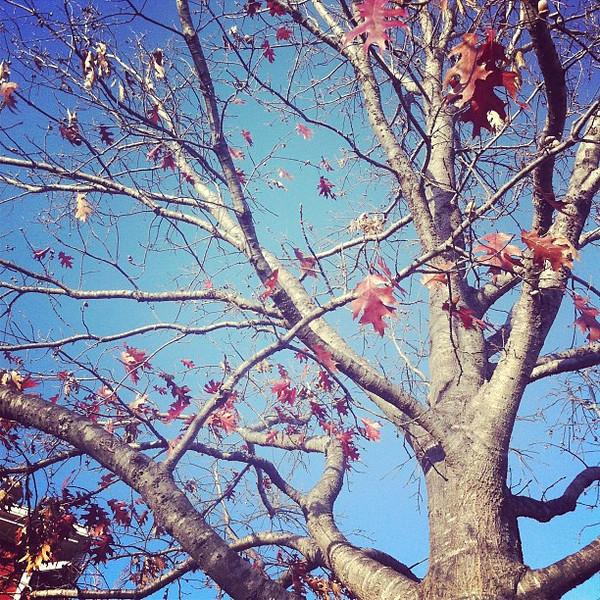 2012-01-22_1327271557.jpg