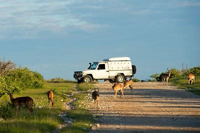 Land Cruiser Africa