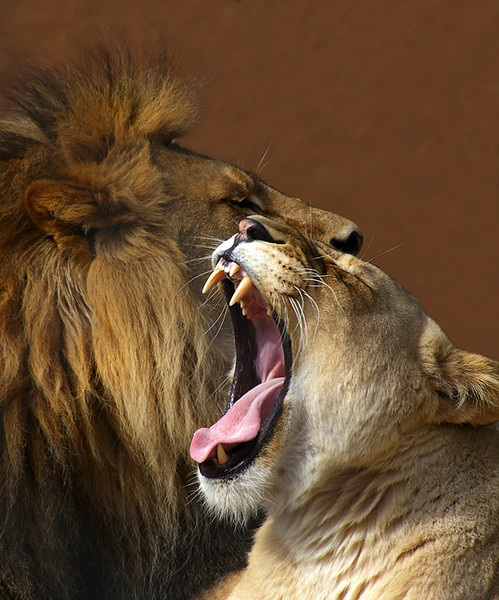 Lions-Aug-17,3.jpg