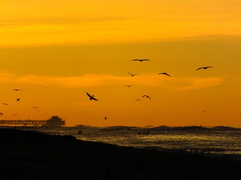Sunrise California Birds.jpg