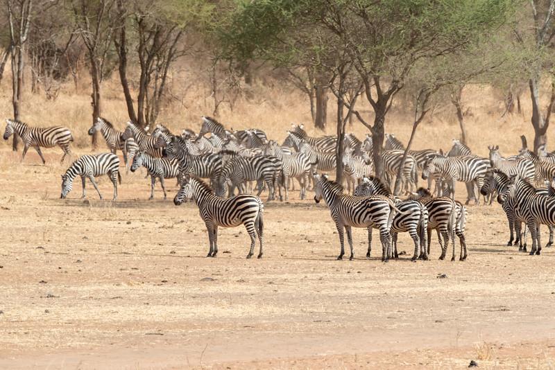 Africa - 102116 - 8210.jpg