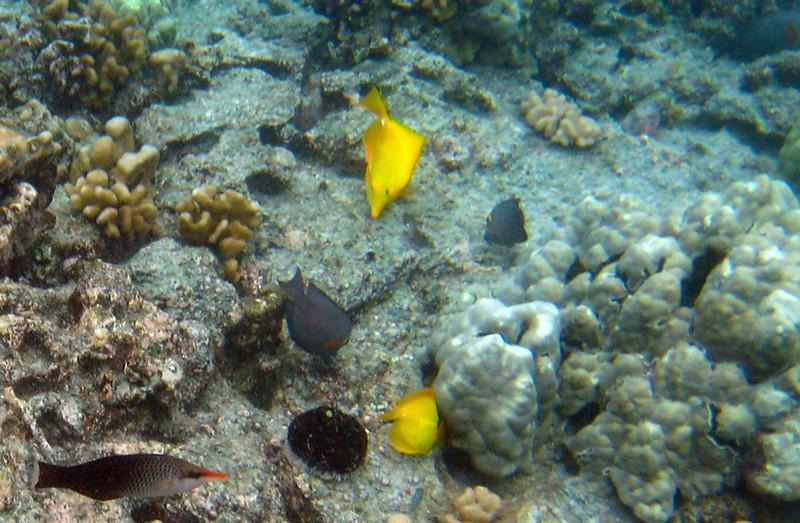457- 20080416- Hawaii 20-Snorkelling IMG_0641.jpg