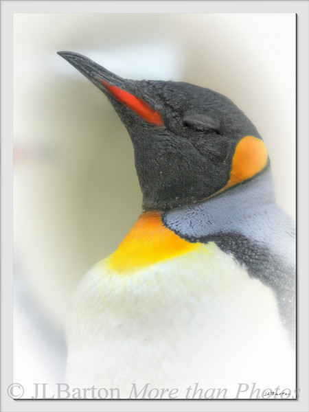 Of Course, I am the