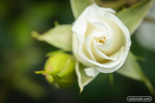 Roses - 181222