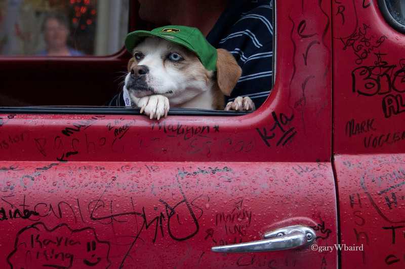 Dog and Driver
