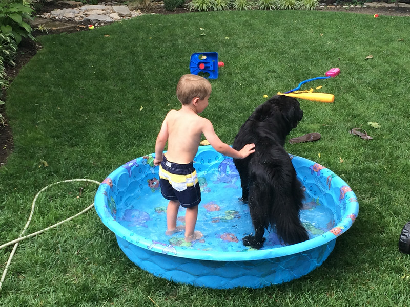 Luca and our neighbor's dog Mariner cooling off.