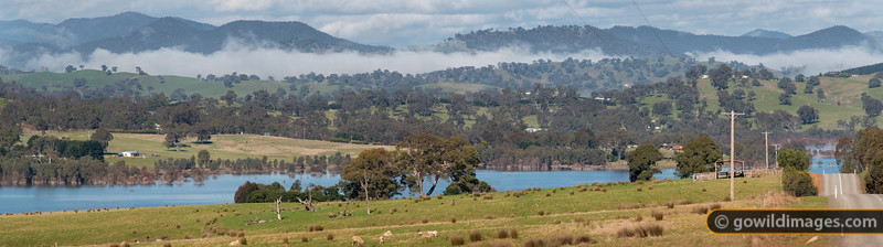 Sheep grazing alongside Burnt Creek Inlet, Lake Eildon. Late morning clouds still linger in the valleys beyond. Taken from near The Paps in Mansfield, this is the view towards Jamieson and the eastern edge of Eildon NP. This panorama can be printed up to 1.4m wide at full photo quality