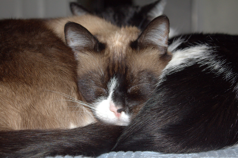 Sue and Gromit, snuggled.