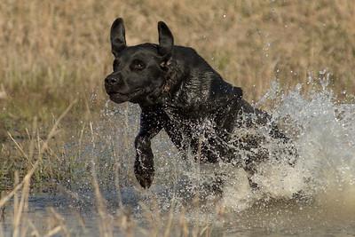 Dog training 4/15/16