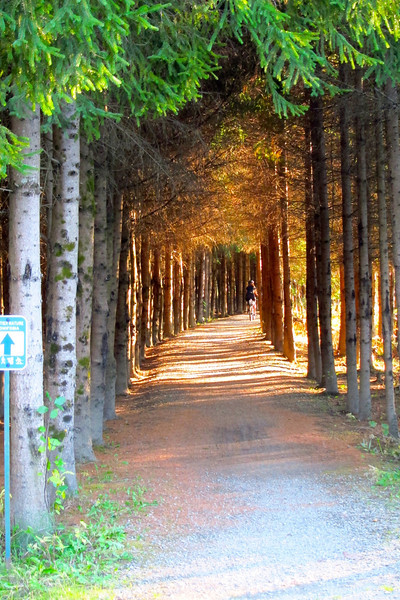 Tunnel Vision. Tomifobia Nature Trail