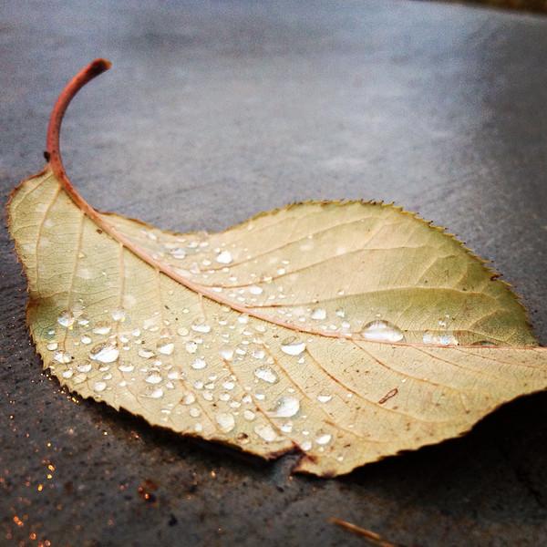 324/365 Dew on a Leaf