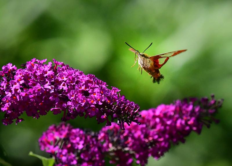 Backyard Flora and Fauna-DSC_4710-090.jpg
