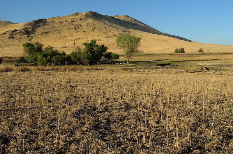 Golden hills on Highway 180, east of Minkler, Fresno County.