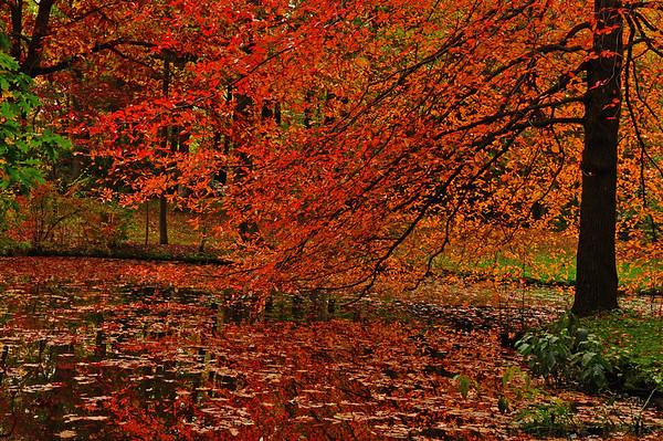 Autumn trail walks