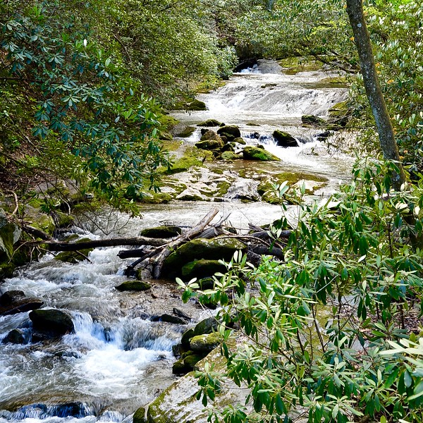 Stream in the woods of Tennessee Mountains.jpg