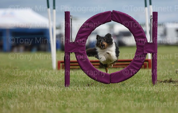 Nottingham Agility Dog Training Club (2)