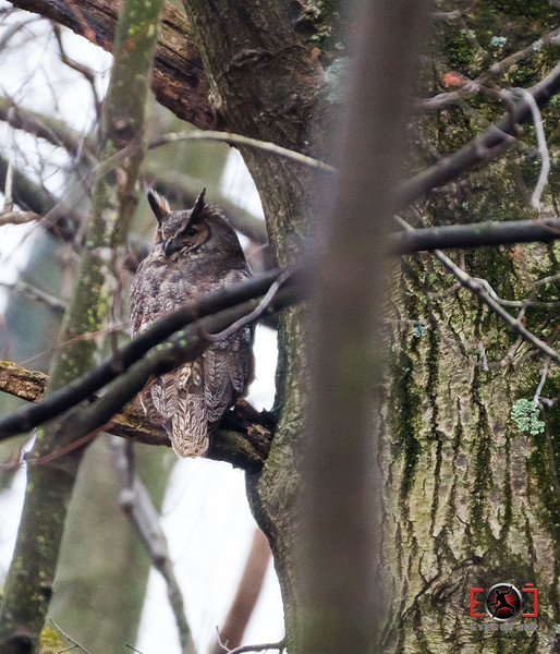 Owl-11.jpg