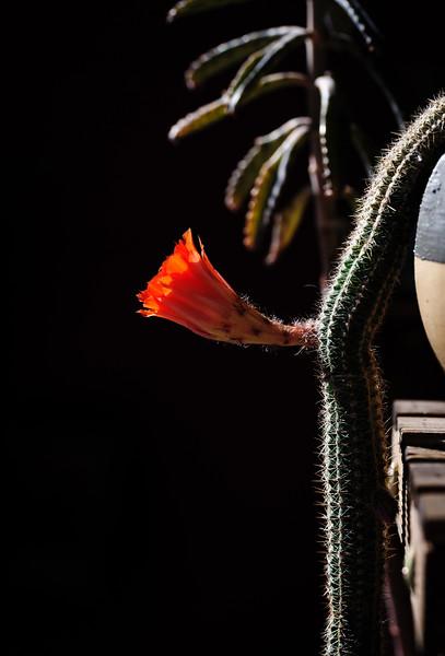 monkeytail flower 043020-2729.jpg