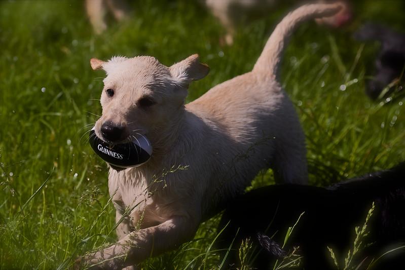 Puppies 806.jpg