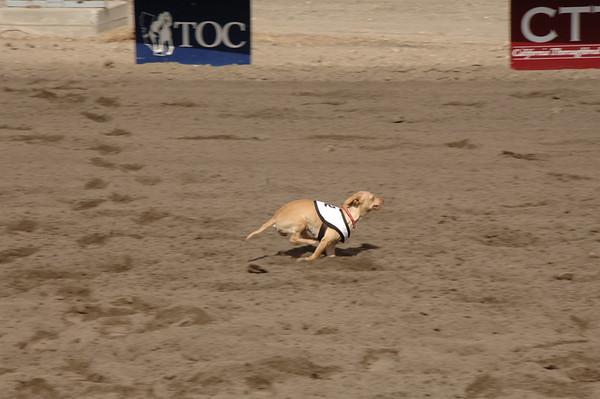 Derby Dog Dash 9-23-12