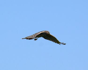 April 2007-Harriers, etc