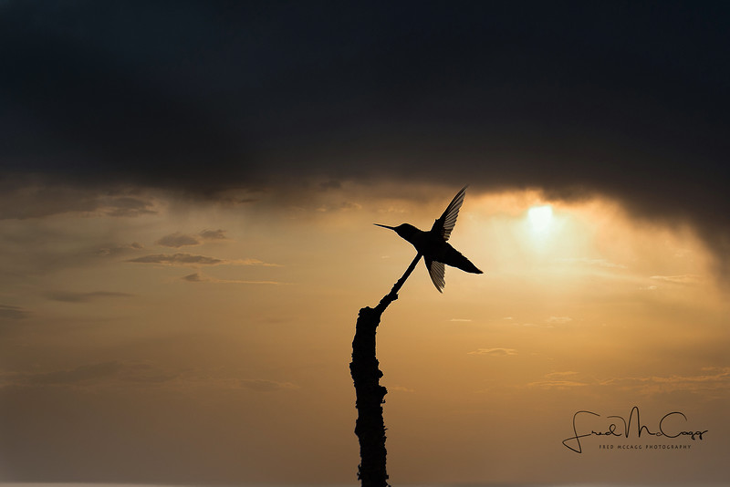Hummingbird Sunset Sillouette.jpg