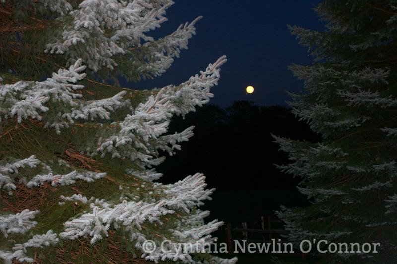 hunters moon.jpg