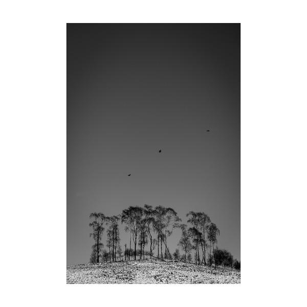14_365_Flying Birds Tree_10x10.jpg