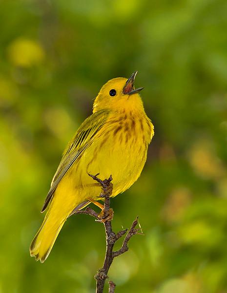 yellow-5383.jpg