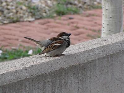 2009-08 (Albuquerque)