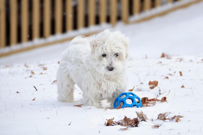 Snow Dog January 9, 2010
