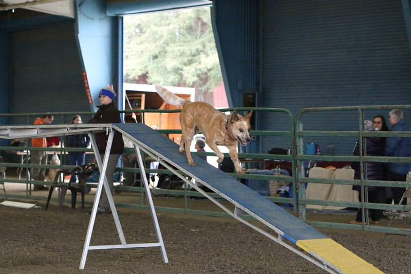3-10-2019 Bloodhound-9702.jpg