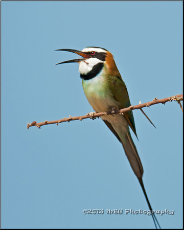 Birds of Kenya