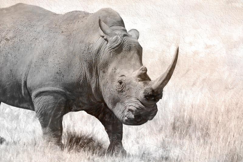 Rhino 8370b.jpg