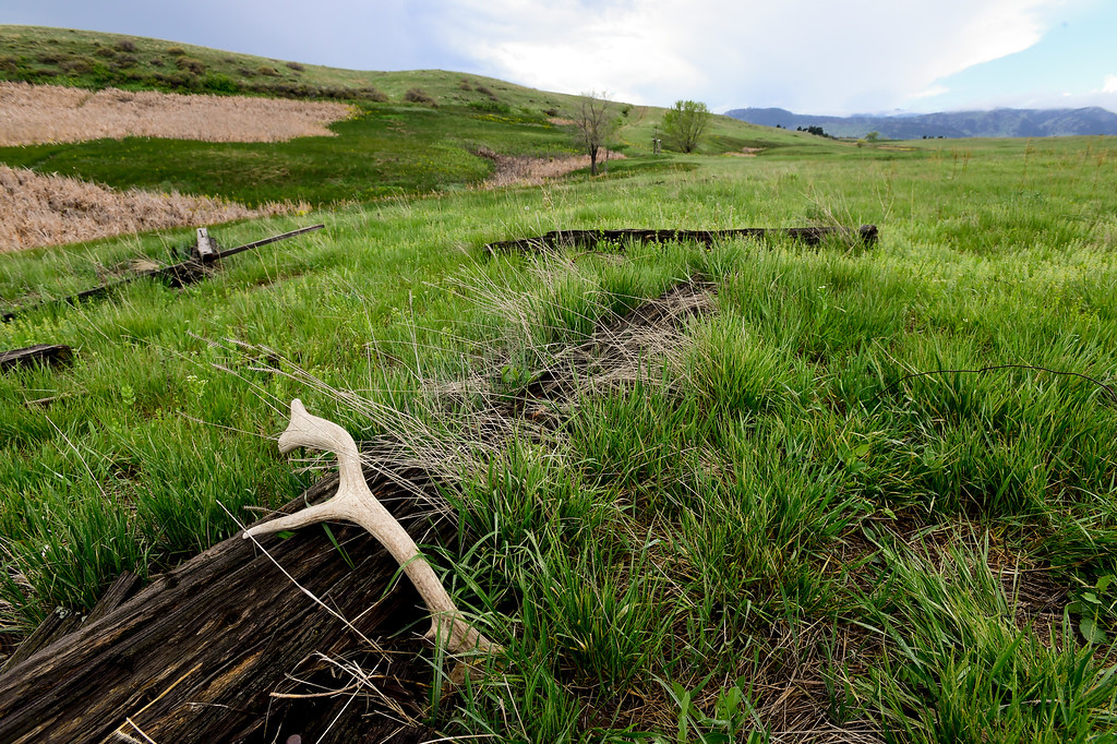 . An antler shed from an Elk is seen lying in the grass near the Lindsay Ranch at the Rocky Flats National Wildlife Refuge in Jefferson County, Colorado on May 14, 2018. (Photo by Matthew Jonas/Staff Photographer)