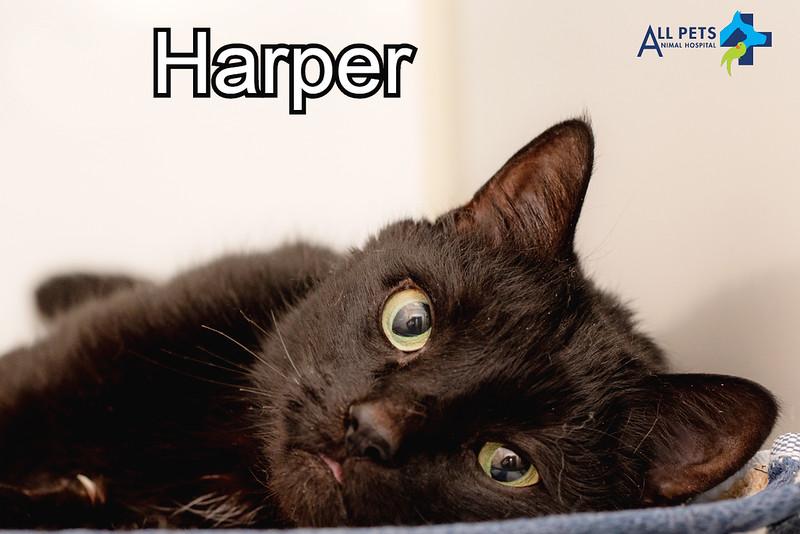 Harper 2 Dr. Cook.jpg