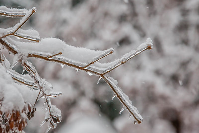 Snow falls after the ice storm