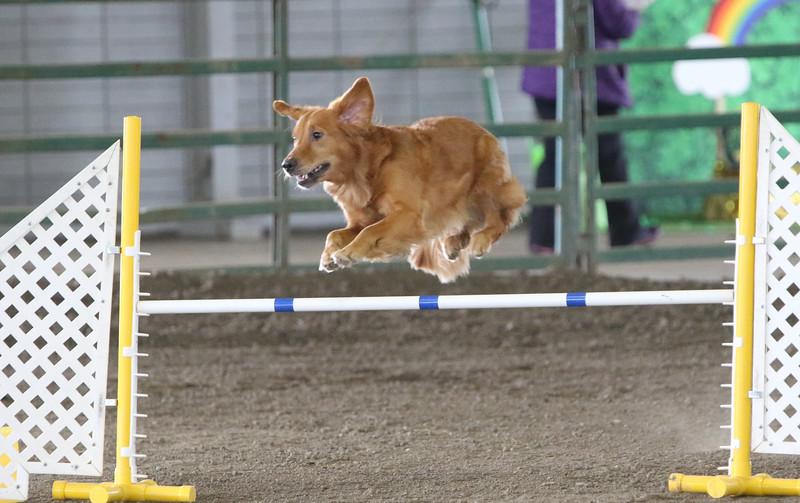3-10-2019 Bloodhound-0976.jpg