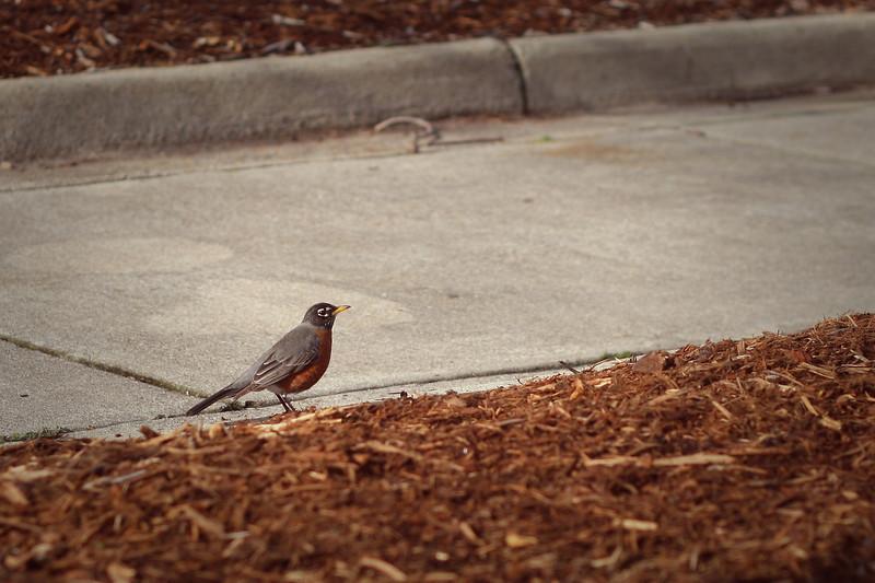 02/09/2012 - Robin