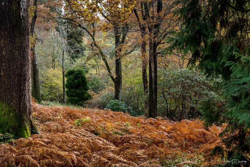 Wakehurst_Autumn-6114.jpg