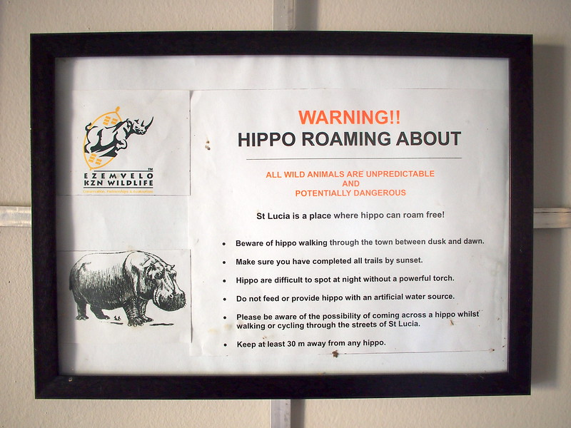 P5046197-hippos-roaming-about.JPG