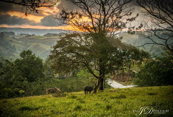 Costa Rica Landscape & FLowers