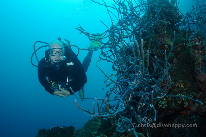 A diver passes by blue coral at Menjangan, Bali