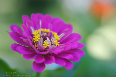Flowers/Insects