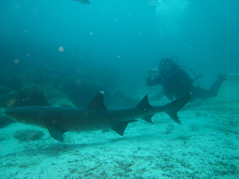 Diving in the Galapagos (159 of 392)