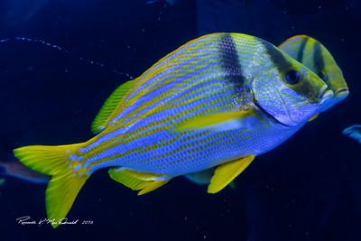2016-08-19 Atlanta Aquarium