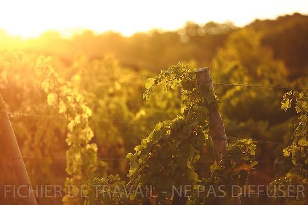 Photothèque | Vignoble, Vendanges, dégustation