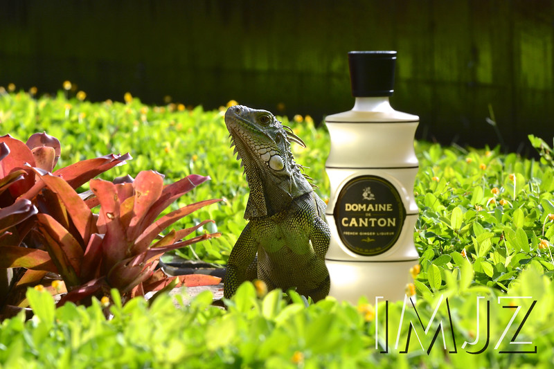 An iguana poses with a bottle of Domaine de Canton at the Heaven Hill Brands Bartender of the Year contest at the St. Regis in Puerto Rico, June 6, 2016.