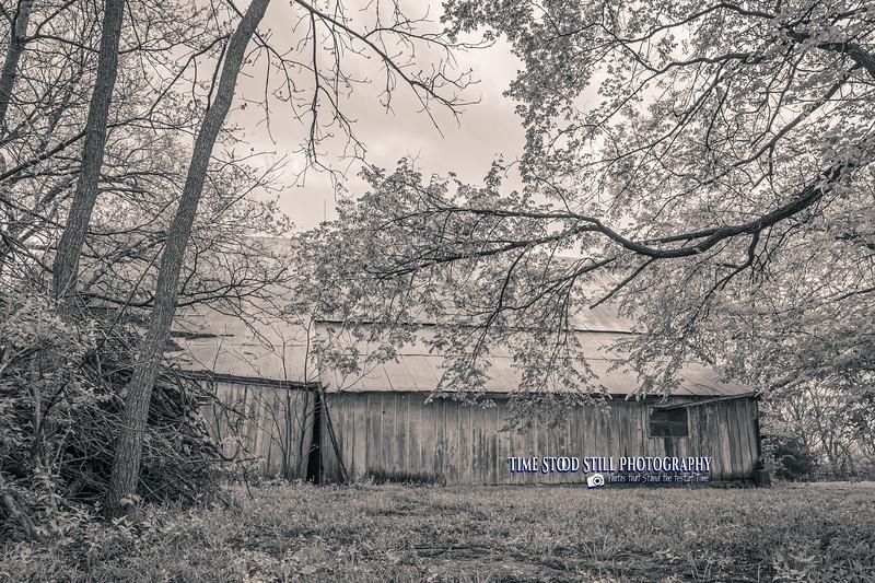 KC Landscape-89.jpg